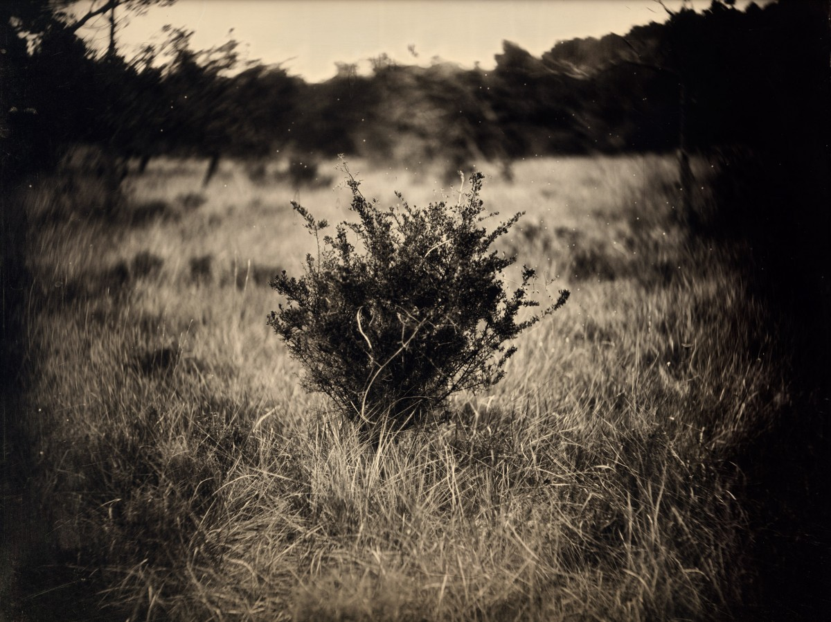Eric Antoine photo Frénésie du Silence L'arbuste